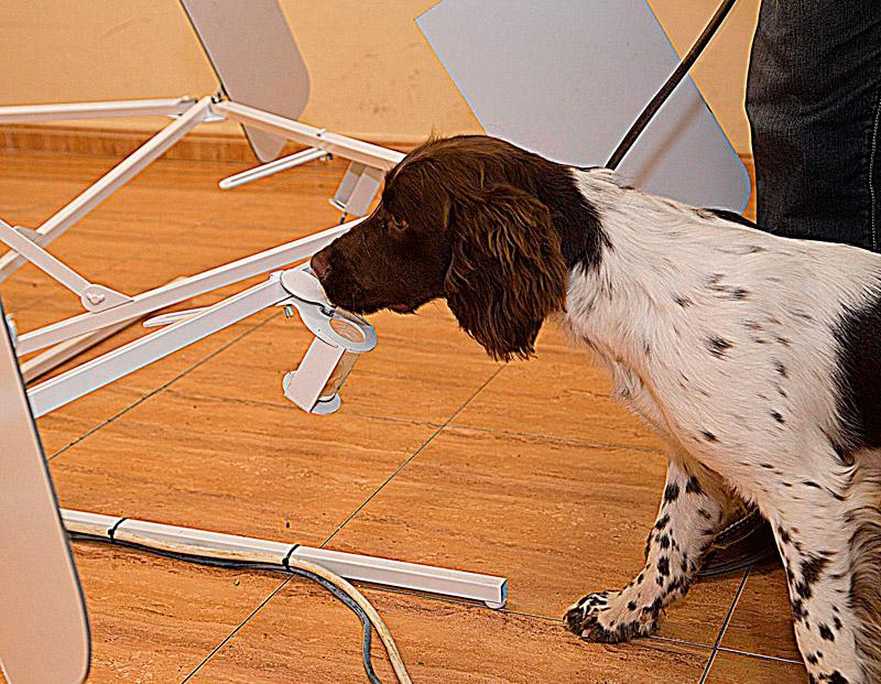 programa-deteccion-olfativa-cancer-en-personas-con-perros-02